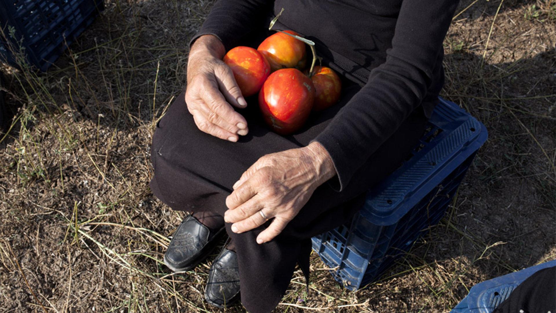 When Tomatoes Met Wagner 3 Website